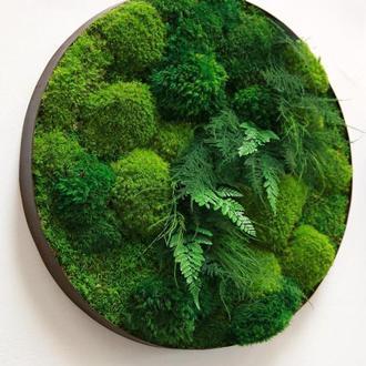 Круглая картина из стабилизированных растений. Панно из стабилизированного мха диаметр 34 см