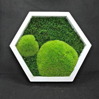 Мох в сотах, Плитка со мхом, стабилизированный мох, 28 см, мох на стены, Картины из Мха