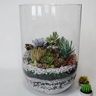 Флорариум (композиция из суккулентов) в стекле