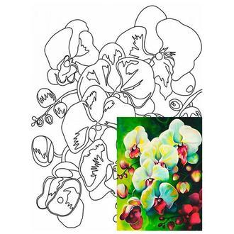 Холст на картоне с контуром 30х40 см Орхидеи