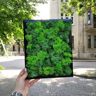 Картина з моху