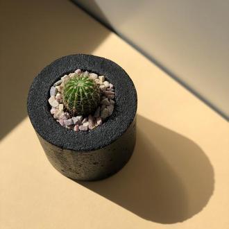 Бетонный горшок с кактусом, кашпо из бетона