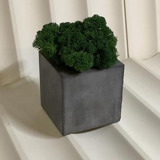 Кашпо з бетону з стабілізованою мохом