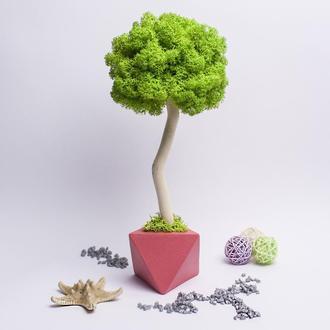 Топіари з стабілізованого моху для інтер'єру. Дерево щастя. Еко.