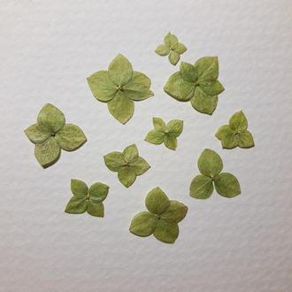 Набор из 10 шт, зеленая гортензия.