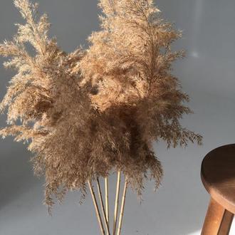 Пампасная трава Тростник Сухоцветы Лагурус для Дэкора
