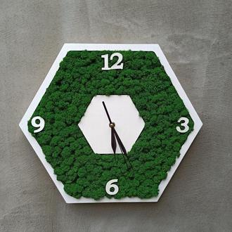 Часы с мхом в форме соты