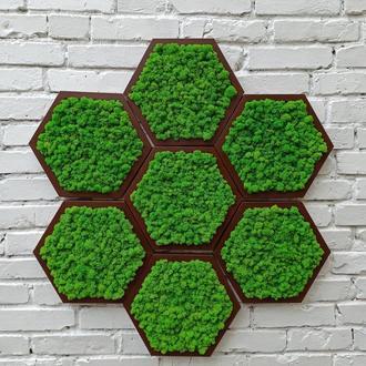 Деревянная сота со стабилизированным зеленым мхом