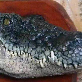 """Маска на стену """" Крокодил """""""