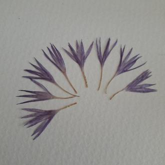 Фиолетовые лепестки василька, набор из 8 шт.