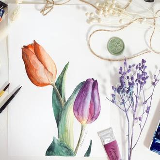 Тюльпани в Акварелі - Оригінальна Картина, Ботанічна Живопис