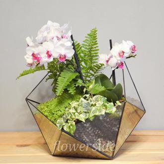 Флорариум XXL с орхидеей