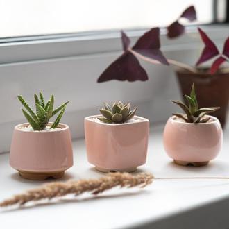 Розовый керамический горшок для кактусов, суккулентов, размер М