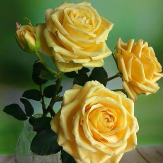 Ветка роз из полимерной глины. В НАЛИЧИИ!