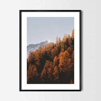 Фотопостер Оранжевый лес
