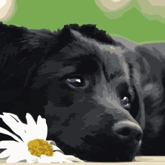 "Картина по номерам ""Чёрный щенок"""