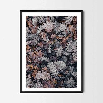 Фотопостер Морозные листья