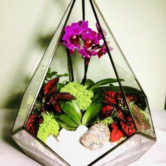Флораріум « Дивовижна орхідея»