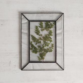 Гербарий  «Ветка с листьями»
