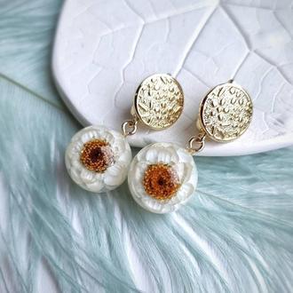 Серьги с белыми цветами аммобиума