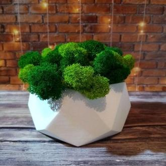 Скандинавський мох ягель в бетонному кашпо. Яскравий подарунок на Новорічні свята. 13,5*6,5 см.