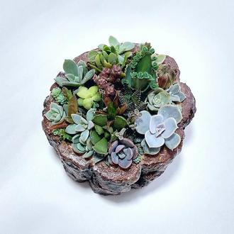 Флорариум в сосновом брусе