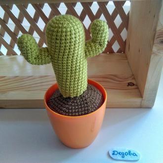 В'язаний кактус