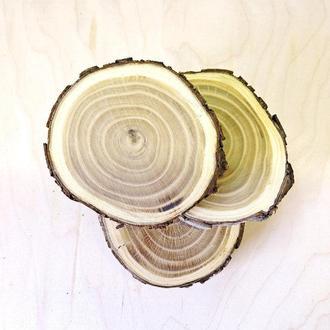 Зріз (спіл) шліфований 12-14см