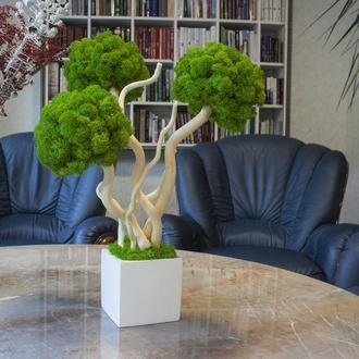 Топіари з стабілізованого моху. Еко-дерево
