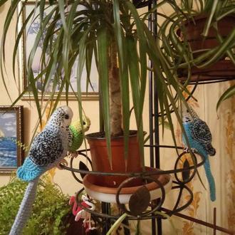 вязаный попугай