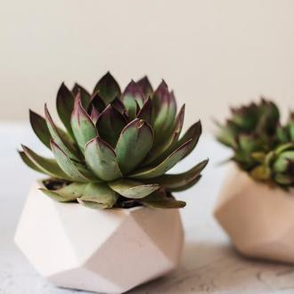 Горшок для цветов,бетонное кашпо, кашпо под суккулент, мох (Код ДИМЕТРА)