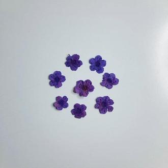 Маленькие фиолетовые цветы, 8 мм.