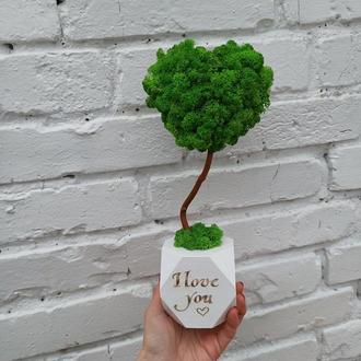 Подарок ко дню святого Валентина, товарной в виде сердца из мха, стабилизировано дерево