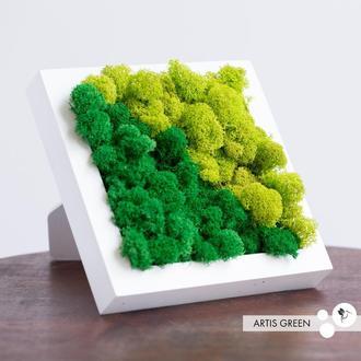 Набор для создания картины стабилизированный мох, 18*18 см