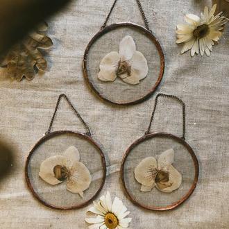 Рамки з засушеними орхідеями. Декор на стінку
