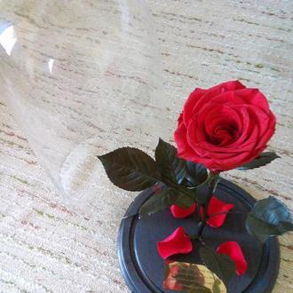 Красная роза в колбе - долгосвежая роза под куполом