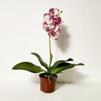 Орхидея фаленопсис из латекса мини пятнистая