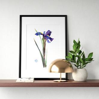 """Акварельные цветы """"Синий ирис"""""""