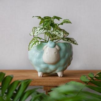 Керамический горшок для растений Овечка мятная, размер M