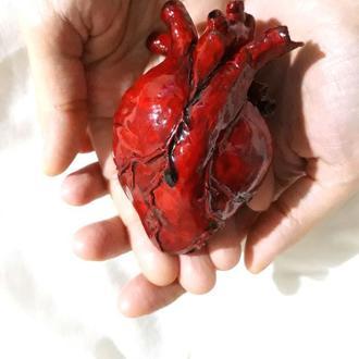 Анатомическое сердце в реальную величину
