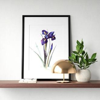 """Постер """"Большой фиолетовый ирис"""""""