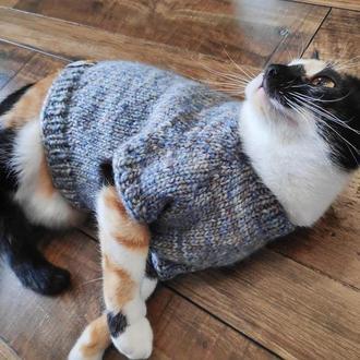 Одежда для кошки. Одежда для животных. Мода для животных