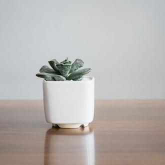 Керамический горшок для кактусов 6,4х6,5см Квадратный Белый