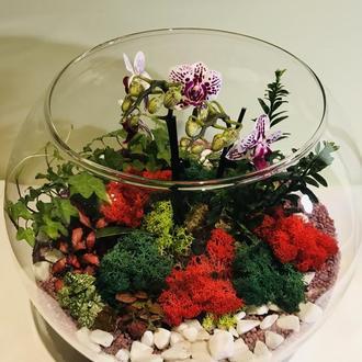 Флорариум с орхидеей.