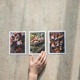 набор открыток с лесными грибами postcrossing