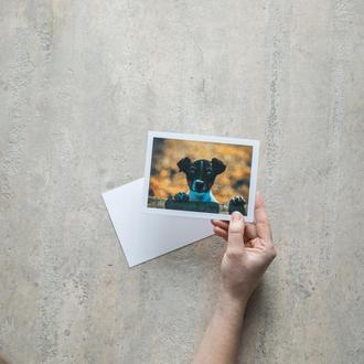 почтовая открытка с щенком Джек Рассел postcrossing