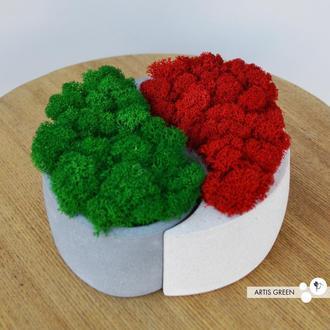 Бетонное кашпо с настоящим скандинавским мхом Инь-Ян, красный и зелёный