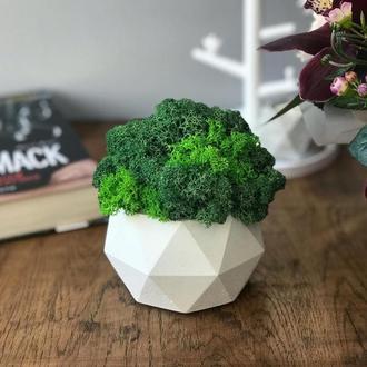 Білий бетонний горщик з стабілізованим мохом зеленим 10*12 см, кашпо для квітів