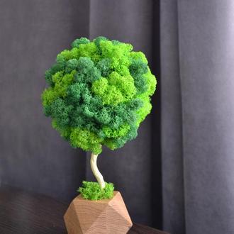 Дерево топиарий с мхом