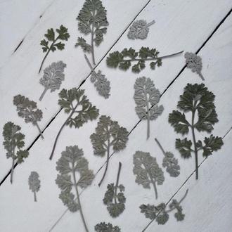 Листья полыни. Сухоцвет.